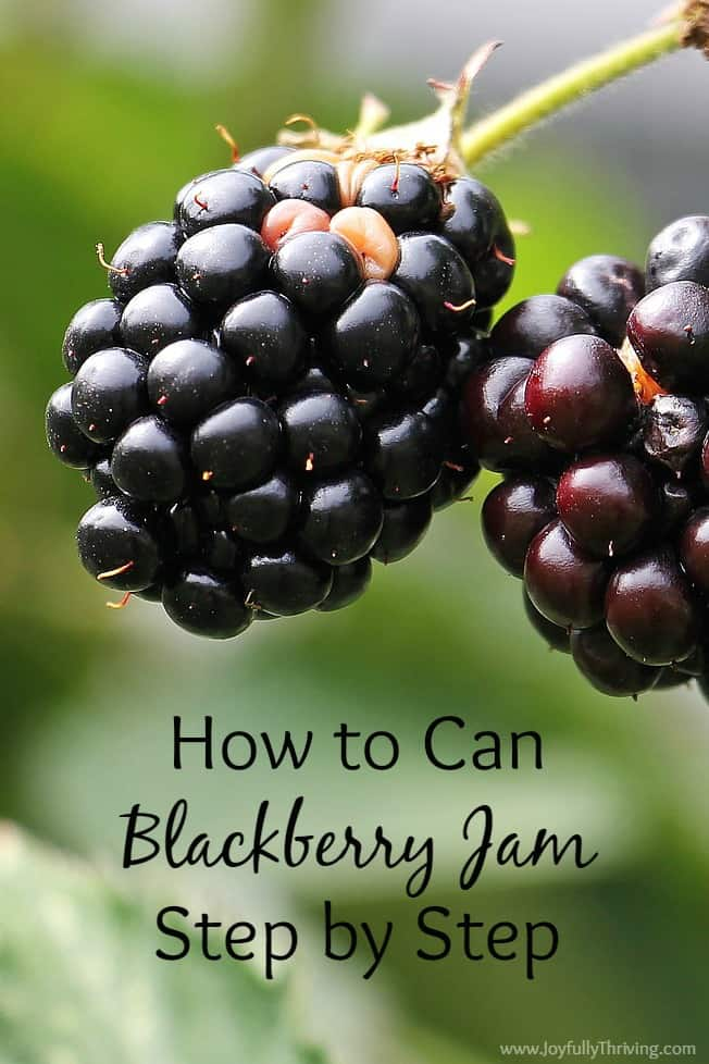 How To Can Blackberry Jam